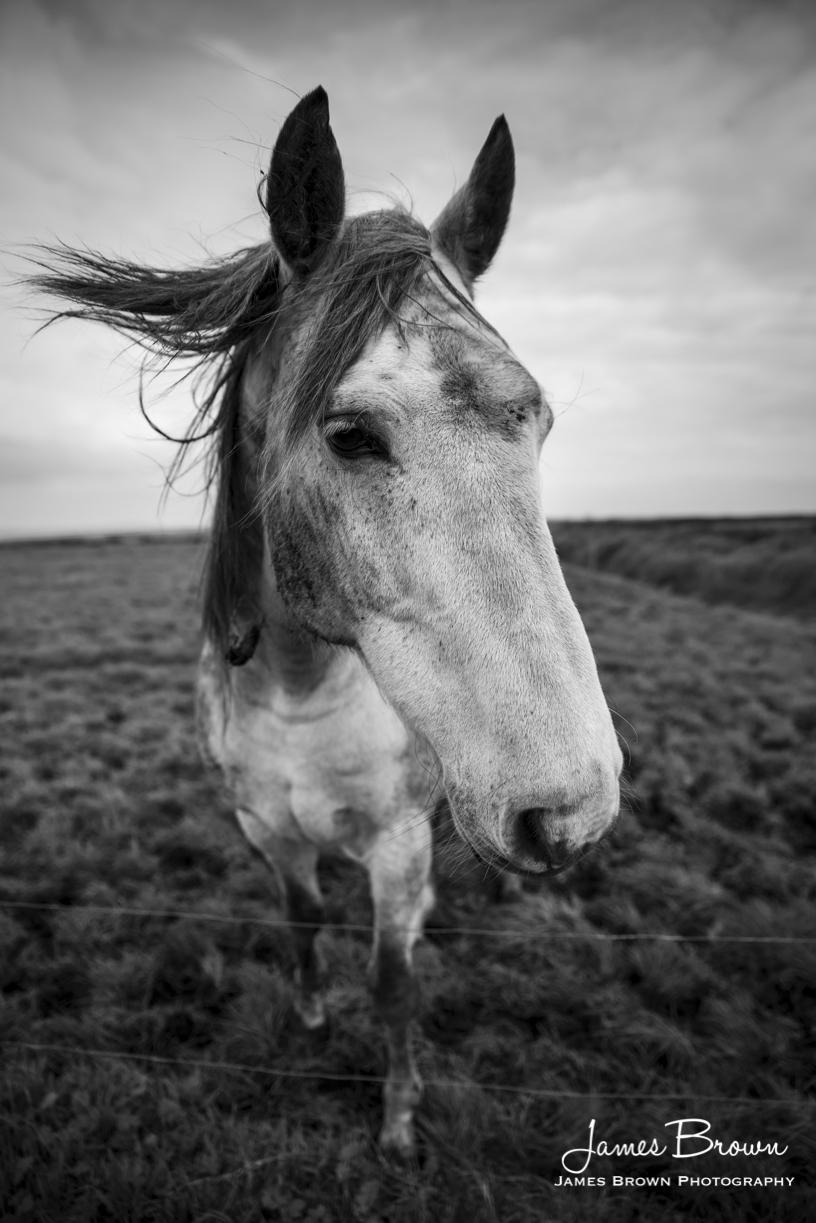 'Bart' the horse