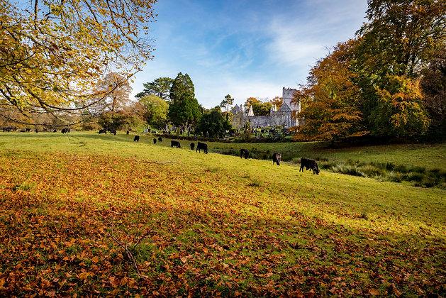Autumn At Muckross Abbey