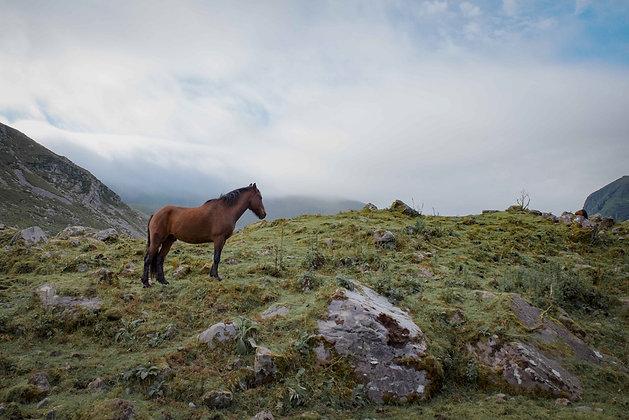 Horse at Gap of Dunloe