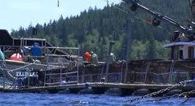 testimonial-marine-harvest-fish-farm.jpg