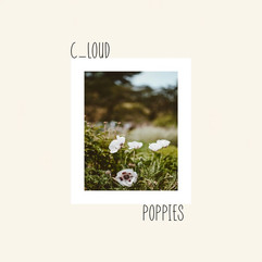 Poppies by C_Loud