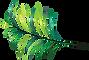 Dr Suzi Craig - Logo_Leaf.png