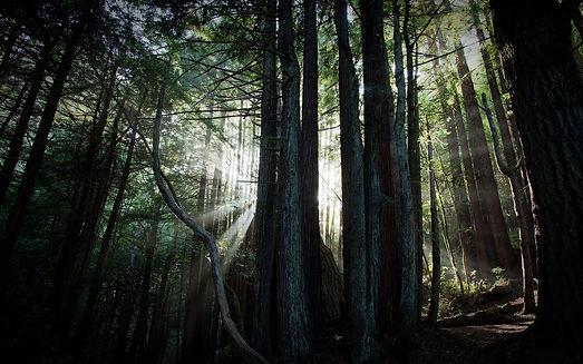 Sacred Grov Reiki: Sessions: Forest