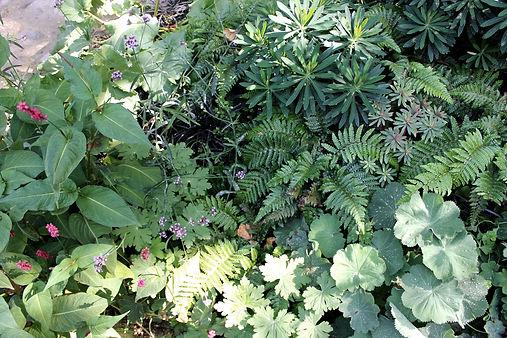 Jardin de fleurs paysagiste France.JPG
