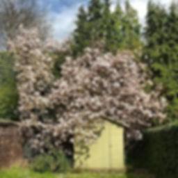 Architecte paysagiste Belgique #magnolia