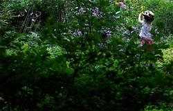 Okuyama_Second_Girl in a Garden
