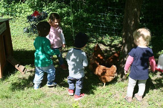 Hühner im Forstamts-Garten