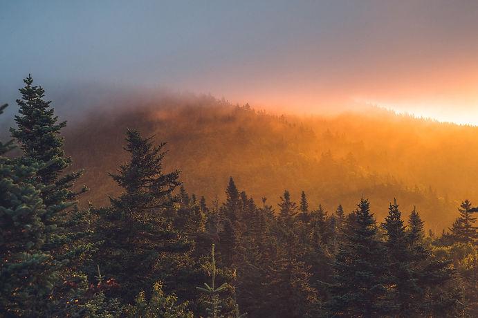 forest sunset-27.jpg
