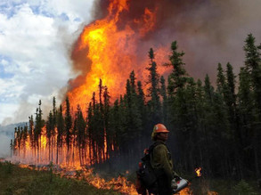 How to help during current wildfires