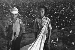 children in the cotton field