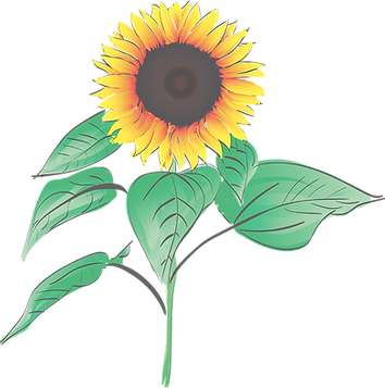 sunflower-1563432_1280_edited.png