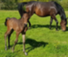 Foal and Mare 1.jpg