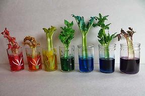 celery-final.jpg