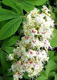 conseilé fleurs de bach cannes
