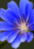 conseillé fleurs de Bach naturopathe cannes