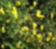 consultation fleurs de Bach cannes