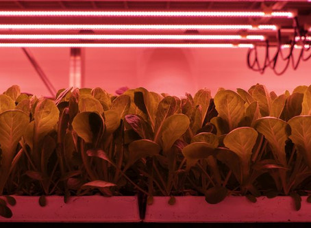 Vertical Farm Made In Italy