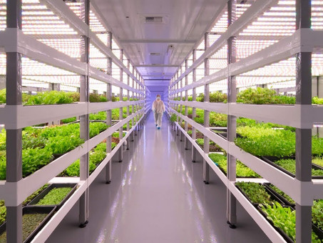 Le piante come bioraffinerie e biofabbriche, col vertical farming è meglio. Anche per i vaccini.