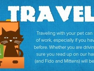 Traveling With Your Pet This Summer?