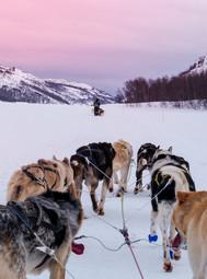 Dog sledding narrow_235226679.jpg