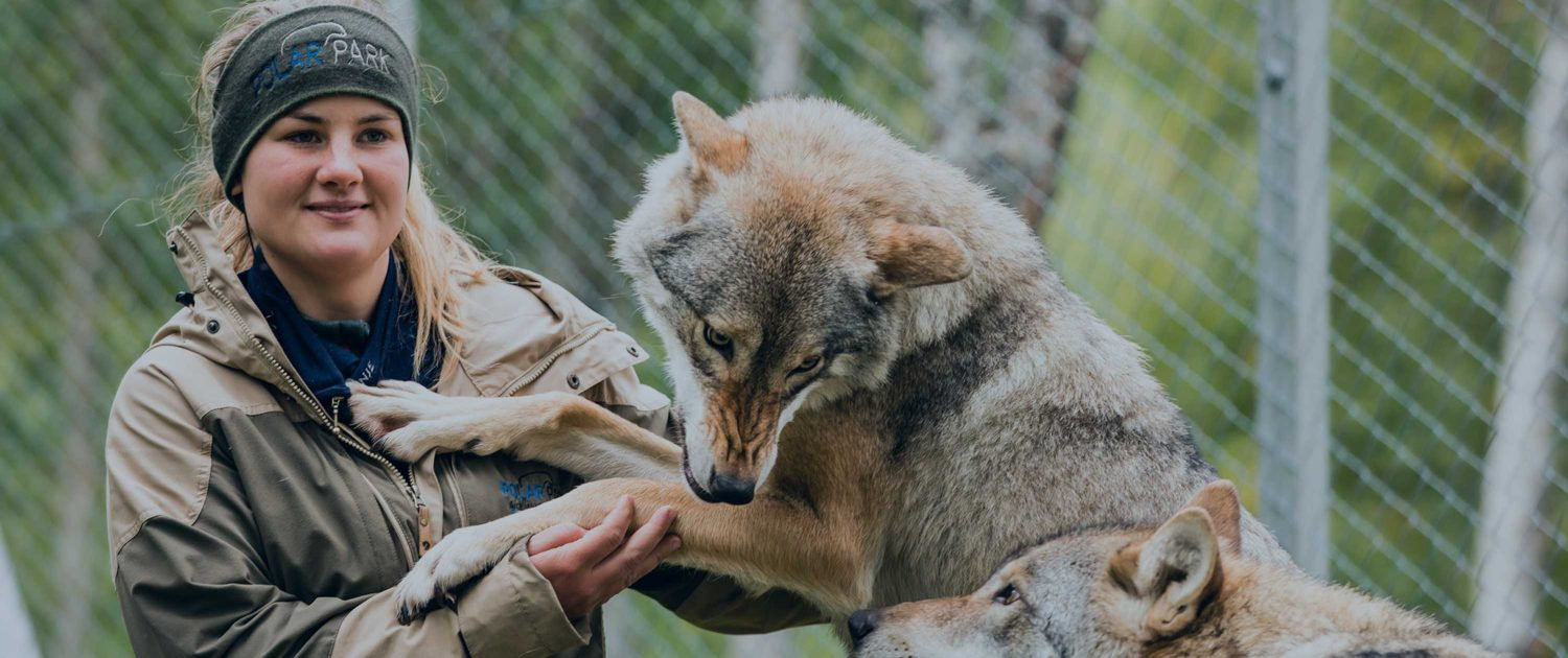 Close-encounter-withe-wolves-1-1500x630.
