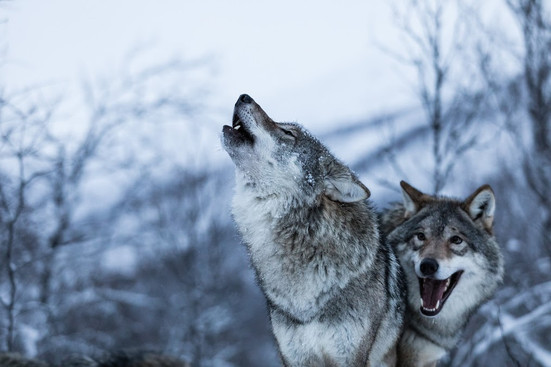 029_WolfLodge-5514.jpg