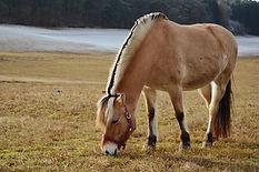 hesteridning_horse_riding.jpg