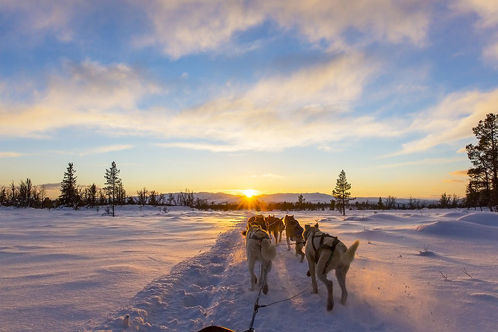 Front slider 2 - dog sledding.jpg