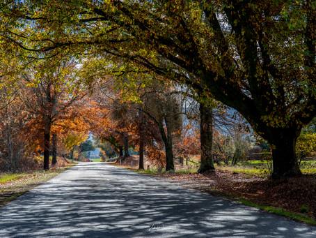 Bright & Surrounds in Autumn