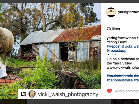 Instagram feature by Yering Farm Wines