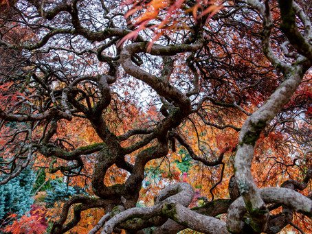 Cloudehill Gardens in Autumn