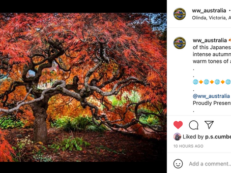 Instagram feature by World Wide Australia