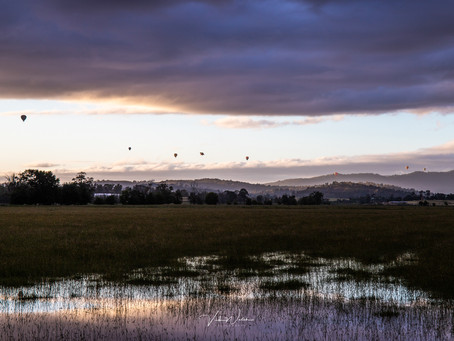 Skywhale - Yarra Valley