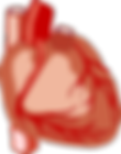 heart-2028154_640.png