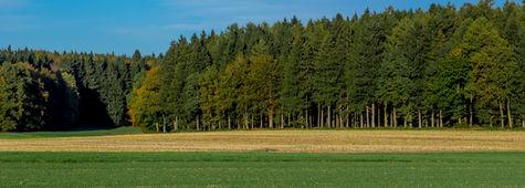 tree row next to a field