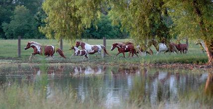 video pic mares water.jpg