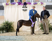 stallion grand.jpg