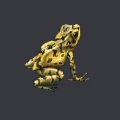 Panamainian Golden Frog (Atelopus zeteki)
