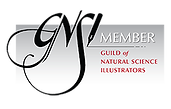 GNSI_Member_Badge_Black_256.png