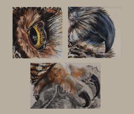 Great Horned Owl Study (Bubo Virginianus)