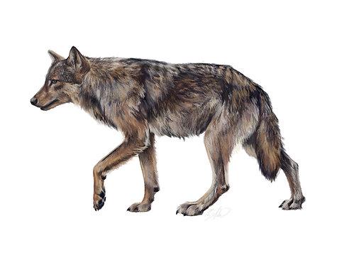 Coastal Wolf Print