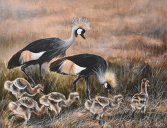 African Crowned Crane Family