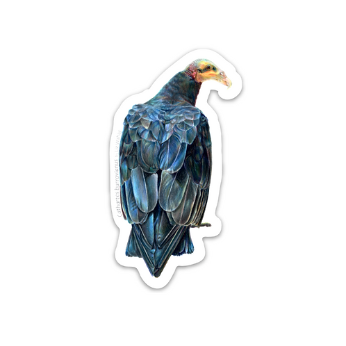 Lesser Yellow-headed Vulture Sticker