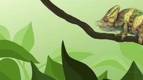 Veiled Chameleon (Chamaeleo calyptratus) Animation