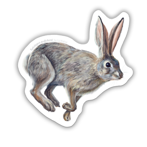 Desert Cottontail Sticker