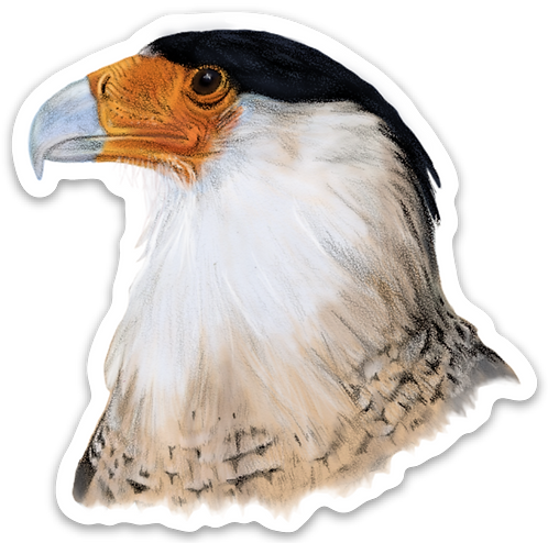Northern Crested Caracara Sticker