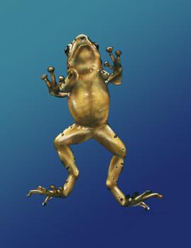 Panamanian Golden Frog Ventral View (Atelopus zeteki)