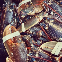 Fresh Bembridge Ledge Lobsters