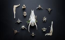 Skulls-RD1-11.jpg