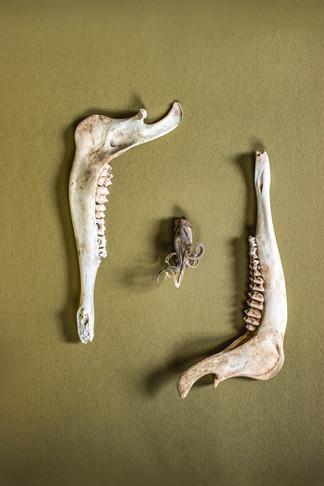 Skulls-RD1-1.jpg